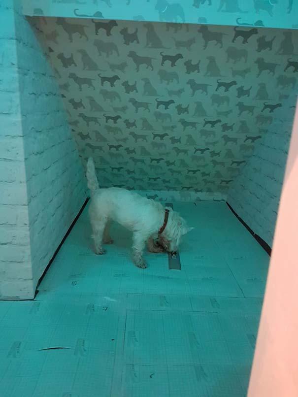 Κατασκευάζοντας ένα υπέροχο δωμάτιο για το σκύλο κάτω από τη σκάλα (10)