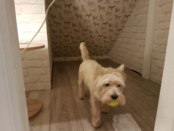 Κατασκευάζοντας ένα υπέροχο δωμάτιο για το σκύλο κάτω από τη σκάλα (12)
