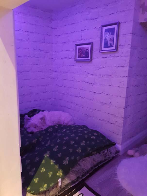 Κατασκευάζοντας ένα υπέροχο δωμάτιο για το σκύλο κάτω από τη σκάλα (18)