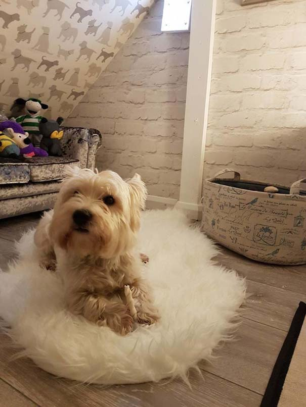 Κατασκευάζοντας ένα υπέροχο δωμάτιο για το σκύλο κάτω από τη σκάλα (20)