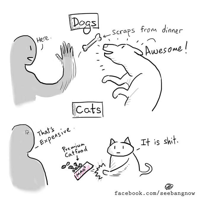 Ξεκαρδιστικά σκίτσα αποκαλύπτουν την πραγματικότητα του να έχεις γάτα (4)