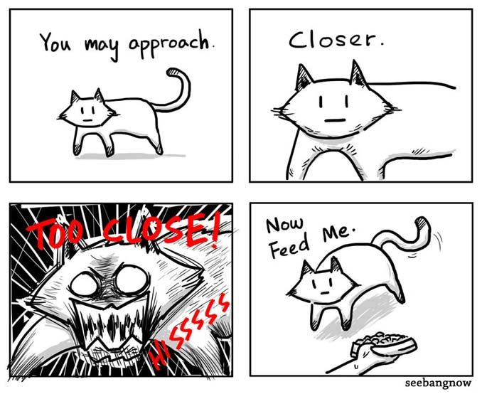 Ξεκαρδιστικά σκίτσα αποκαλύπτουν την πραγματικότητα του να έχεις γάτα (13)