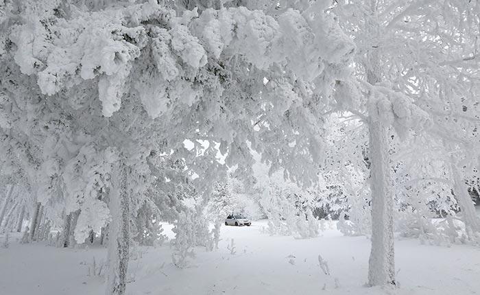 Επίσκεψη στο παγωμένο δάσος | Φωτογραφία της ημέρας