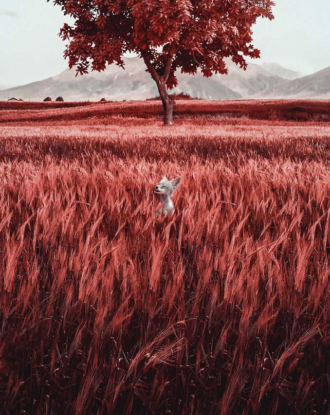 Πώς βλέπουν τον κόσμο οι άνθρωποι με Τριτανοπία (12)