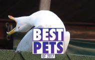 Τα πιο απίθανα βιντεάκια με ζώα για το 2017