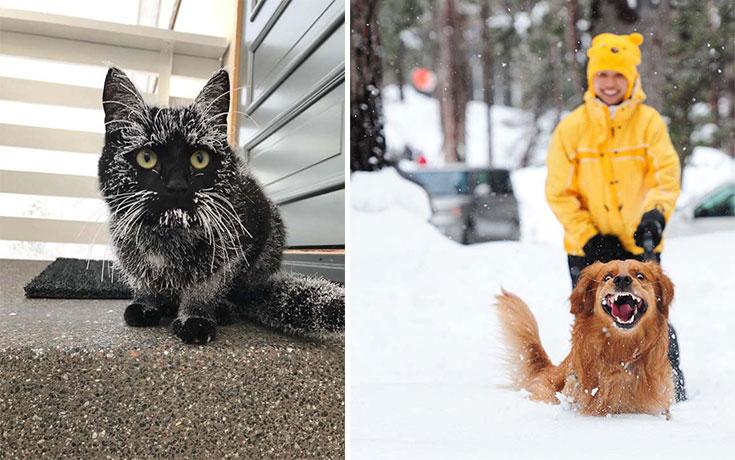 Ζώα που ήρθαν πρώτη φορά αντιμέτωπα με το χιόνι (16)