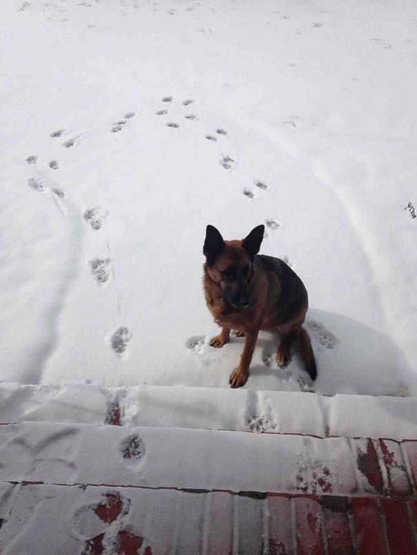 Ζώα που ήρθαν πρώτη φορά αντιμέτωπα με το χιόνι (3)