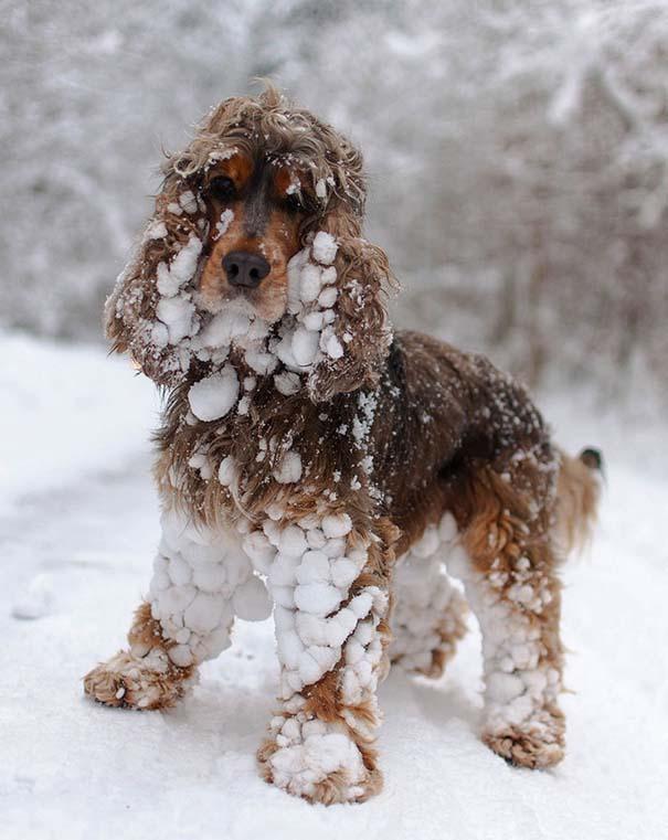 Ζώα που ήρθαν πρώτη φορά αντιμέτωπα με το χιόνι (7)