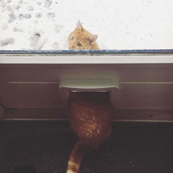 Ζώα που ήρθαν πρώτη φορά αντιμέτωπα με το χιόνι (8)