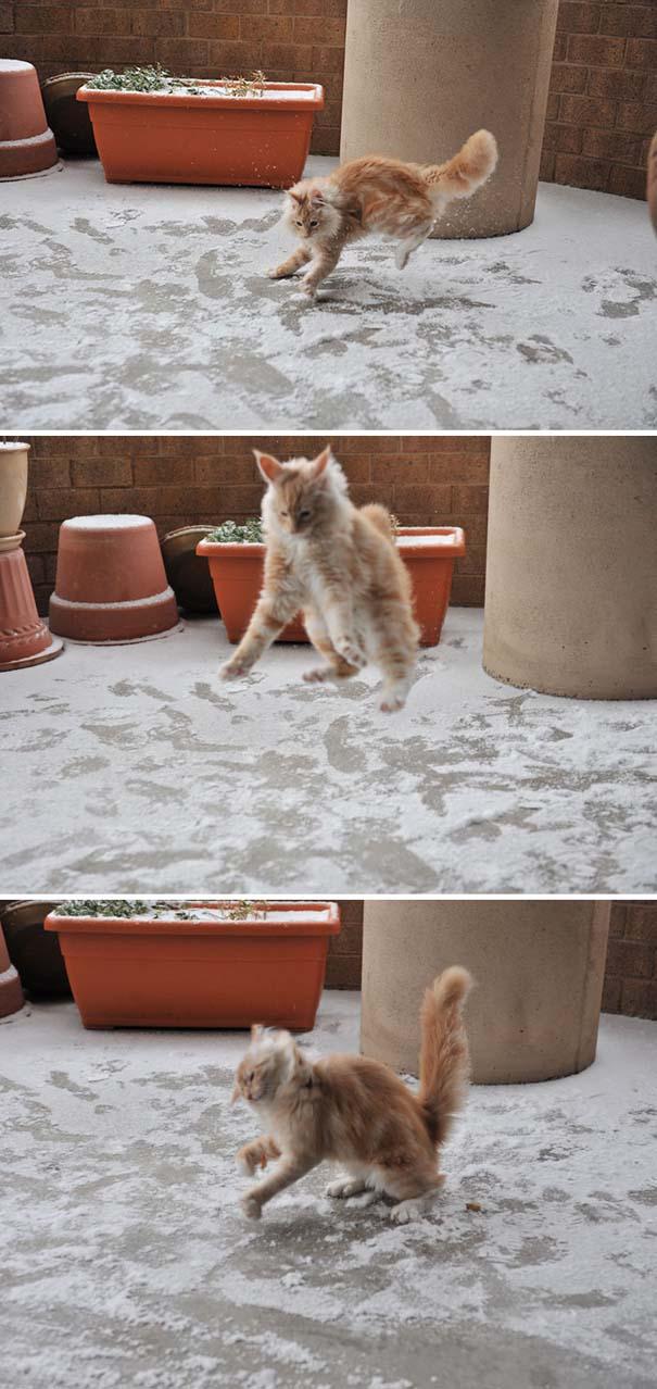 Ζώα που ήρθαν πρώτη φορά αντιμέτωπα με το χιόνι (11)