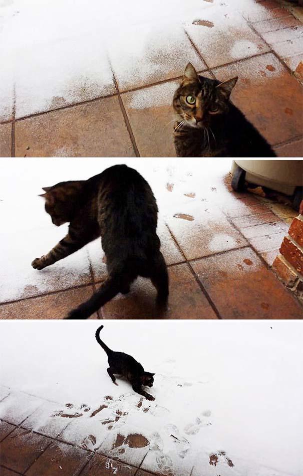 Ζώα που ήρθαν πρώτη φορά αντιμέτωπα με το χιόνι (12)