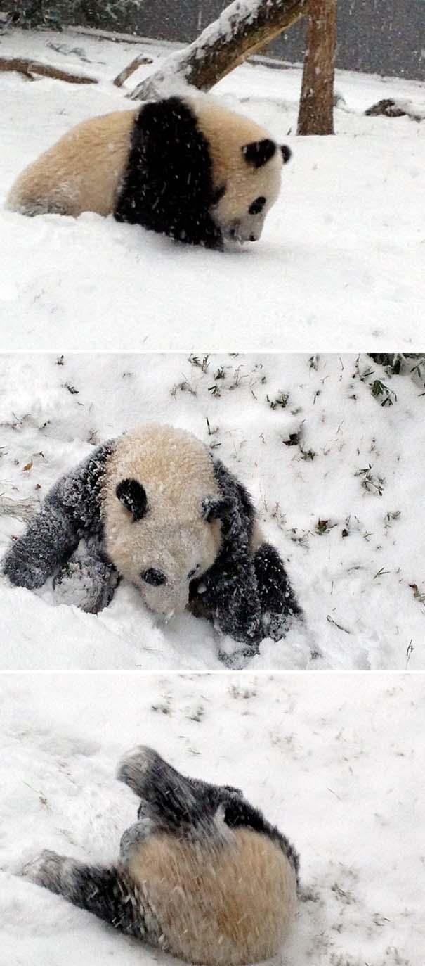 Ζώα που ήρθαν πρώτη φορά αντιμέτωπα με το χιόνι (14)