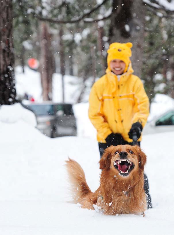 Ζώα που ήρθαν πρώτη φορά αντιμέτωπα με το χιόνι (15)