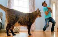Άνδρας προσποιείται πως πέθανε για να δει την αντίδραση της γάτας του