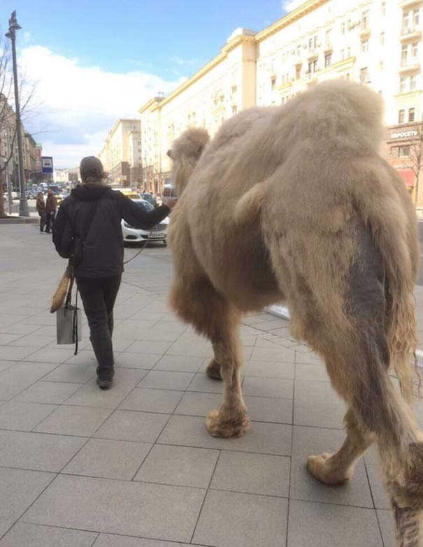 Εν τω μεταξύ, στη Ρωσία... #166 (4)