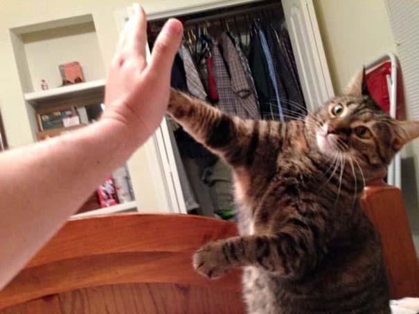 Γάτες που... κάνουν τα δικά τους! #81 (3)
