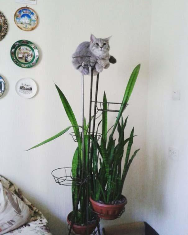 Γάτες που... κάνουν τα δικά τους! #81 (5)