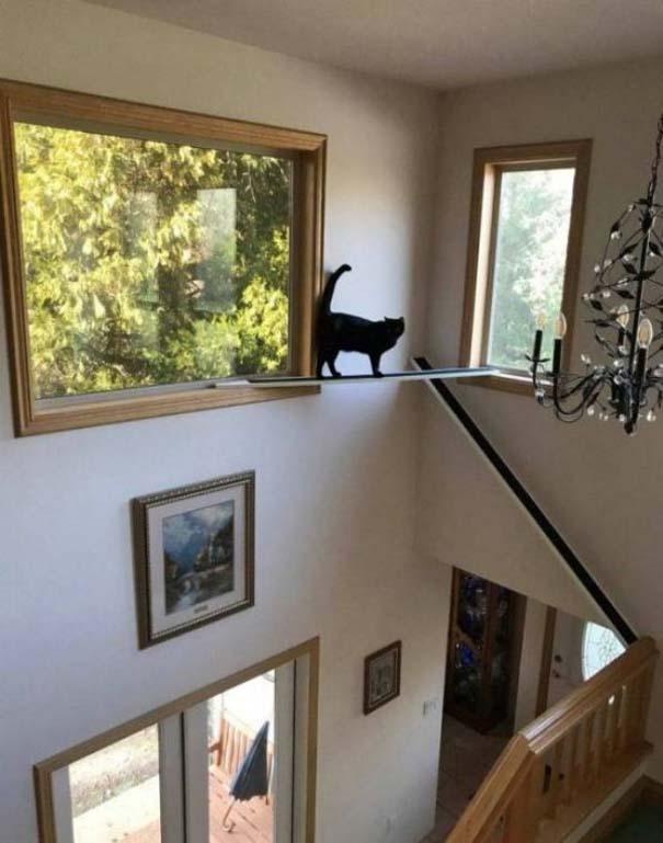 Γάτες που... κάνουν τα δικά τους! #81 (7)
