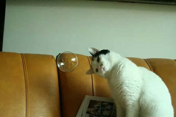 Γάτες που... κάνουν τα δικά τους! #82 (3)