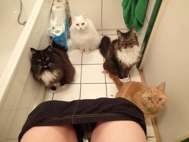 Γάτες που... κάνουν τα δικά τους! #82 (8)