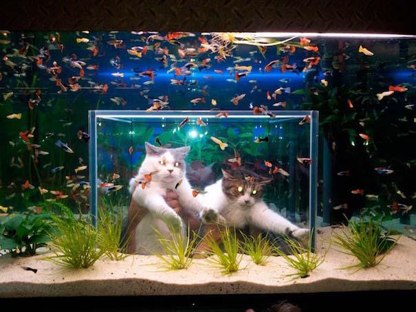 Γάτες που... κάνουν τα δικά τους! #82 (9)