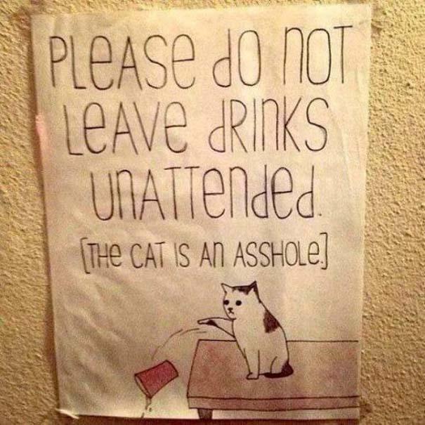 Γάτες που... κάνουν τα δικά τους! #83 (2)