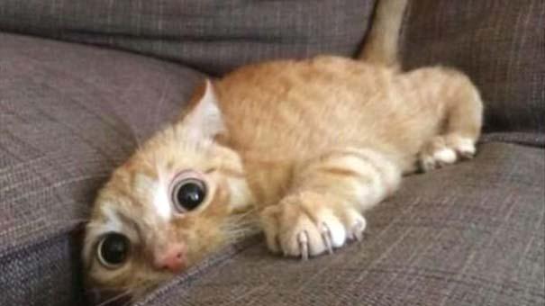 Γάτες που... κάνουν τα δικά τους! #83 (5)