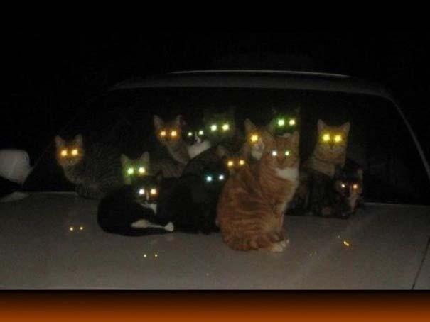 Γάτες που... κάνουν τα δικά τους! #83 (6)