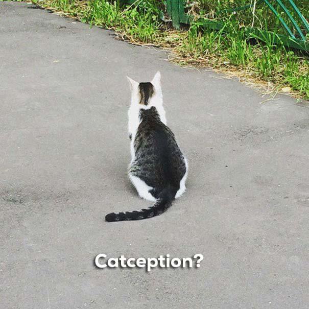 Γάτες που... κάνουν τα δικά τους! #83 (8)