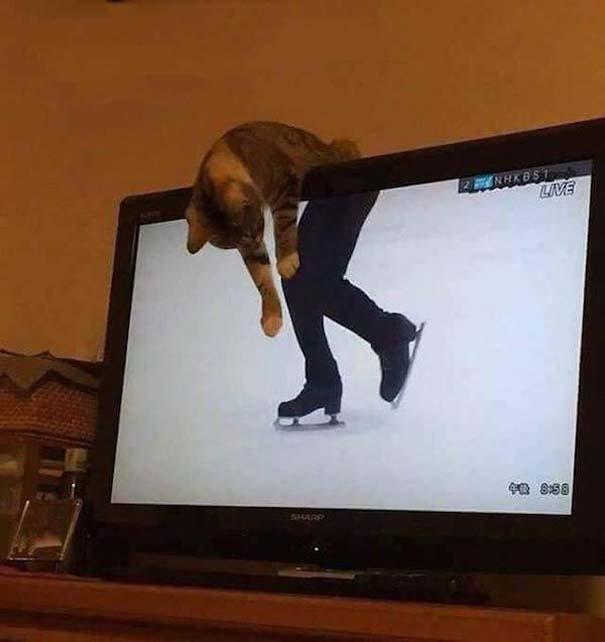 Γάτες που... κάνουν τα δικά τους! #83 (9)