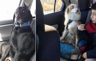 Η ξεκαρδιστική στιγμή που σκύλοι συνειδητοποιούν πως πάνε στον κτηνίατρο και όχι στο πάρκο