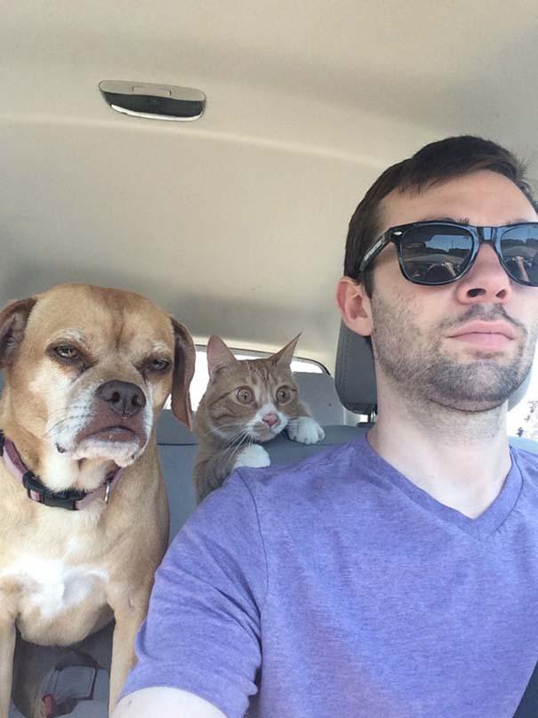 Η ξεκαρδιστική στιγμή που σκύλοι συνειδητοποιούν πως πάνε στον κτηνίατρο και όχι στο πάρκο (1)