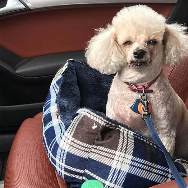 Η ξεκαρδιστική στιγμή που σκύλοι συνειδητοποιούν πως πάνε στον κτηνίατρο και όχι στο πάρκο (7)
