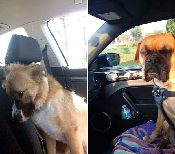 Η ξεκαρδιστική στιγμή που σκύλοι συνειδητοποιούν πως πάνε στον κτηνίατρο και όχι στο πάρκο (8)
