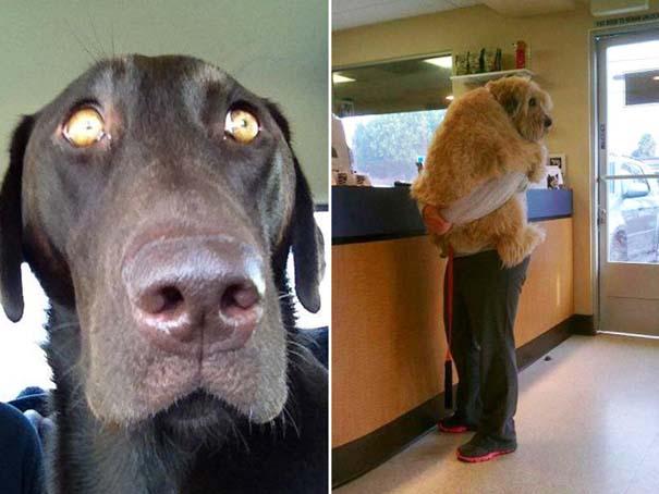 Η ξεκαρδιστική στιγμή που σκύλοι συνειδητοποιούν πως πάνε στον κτηνίατρο και όχι στο πάρκο (13)