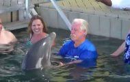 Μια τρελή τρελή συνάντηση με ένα δελφίνι