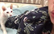 Όταν η γάτα σου έχει βαρεθεί να κοιτάζεσαι συνέχεια στην κάμερα του κινητού