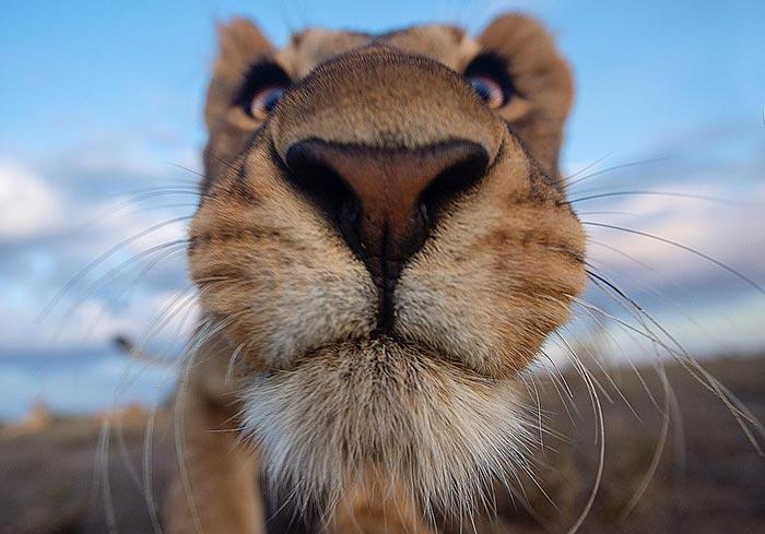 Κάτω από τη μύτη του θηρίου | Φωτογραφία της ημέρας