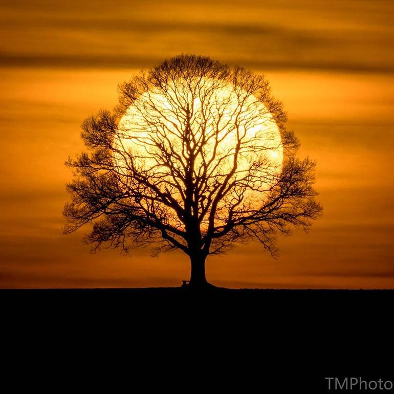 Το «Δένδρο του Ήλιου» | Φωτογραφία της ημέρας