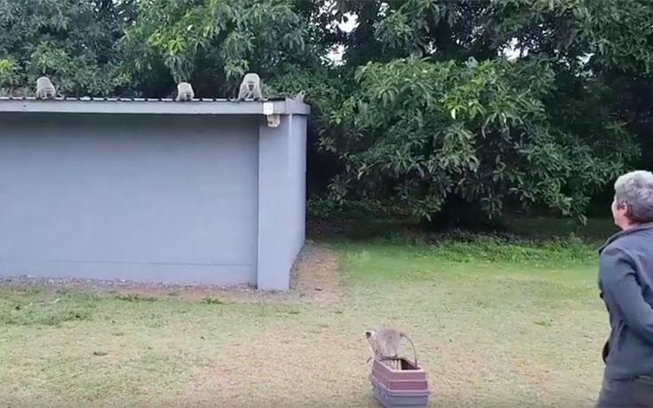 Η συγκινητική στιγμή που ένα μαϊμουδάκι ξανασμίγει με την οικογένειά του
