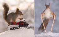 Αυτοί οι σκίουροι είναι έτοιμοι για τους χειμερινούς Ολυμπιακούς Αγώνες