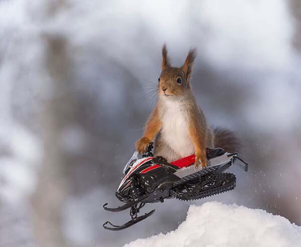 Αυτοί οι σκίουροι είναι έτοιμοι για τους χειμερινούς Ολυμπιακούς Αγώνες (1)