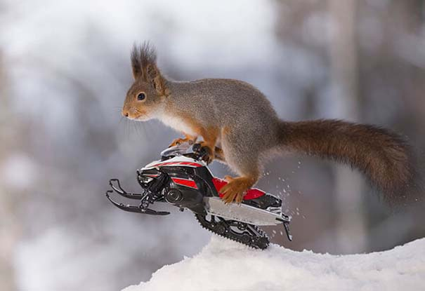 Αυτοί οι σκίουροι είναι έτοιμοι για τους χειμερινούς Ολυμπιακούς Αγώνες (2)