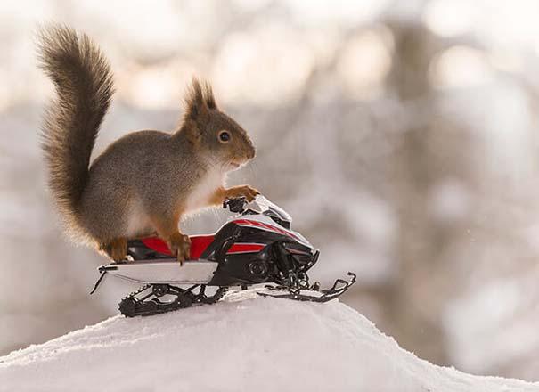 Αυτοί οι σκίουροι είναι έτοιμοι για τους χειμερινούς Ολυμπιακούς Αγώνες (3)