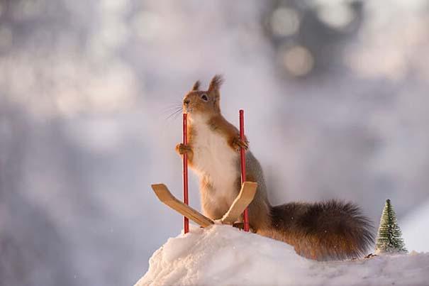 Αυτοί οι σκίουροι είναι έτοιμοι για τους χειμερινούς Ολυμπιακούς Αγώνες (5)