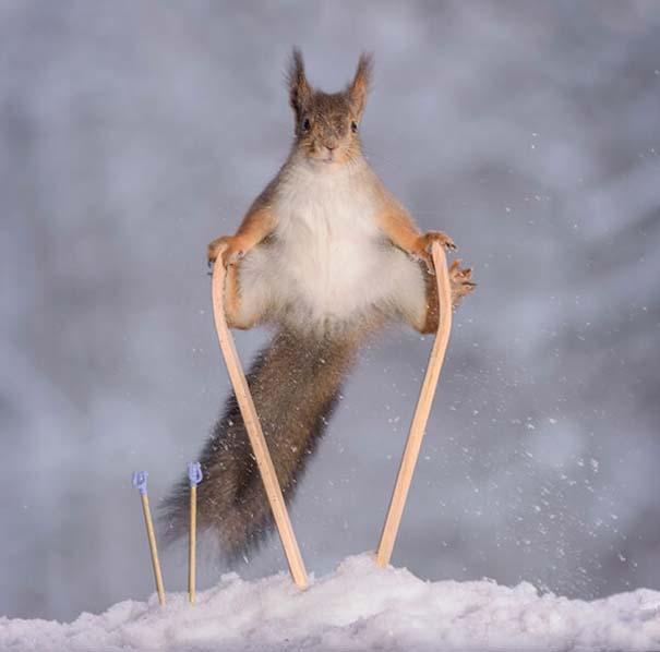 Αυτοί οι σκίουροι είναι έτοιμοι για τους χειμερινούς Ολυμπιακούς Αγώνες (6)