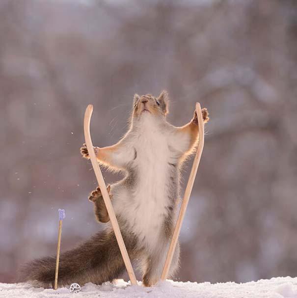 Αυτοί οι σκίουροι είναι έτοιμοι για τους χειμερινούς Ολυμπιακούς Αγώνες (7)