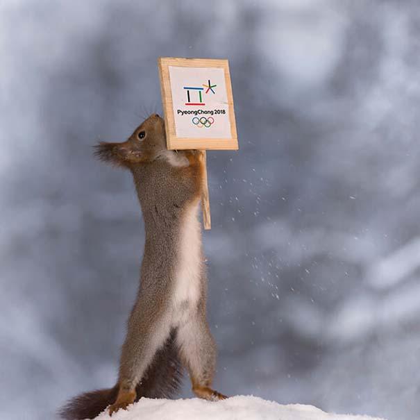 Αυτοί οι σκίουροι είναι έτοιμοι για τους χειμερινούς Ολυμπιακούς Αγώνες (8)