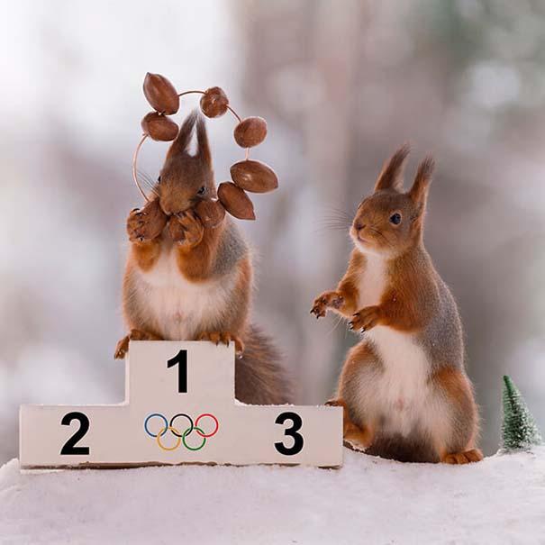 Αυτοί οι σκίουροι είναι έτοιμοι για τους χειμερινούς Ολυμπιακούς Αγώνες (10)