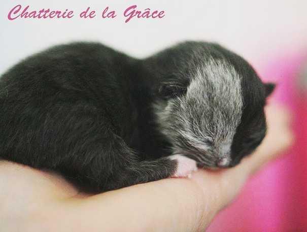 Σπάνιο γατάκι που γεννήθηκε με δύο πρόσωπα, εξελίχθηκε σε μια πανέμορφη γάτα (2)